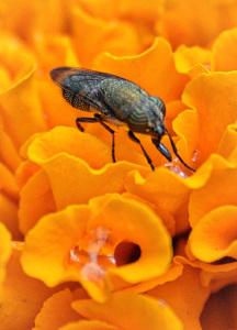 Thirsty Bug