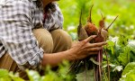 Young farm startups go back to theland