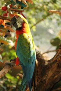 parrot_full