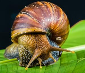 snail-424133_1280